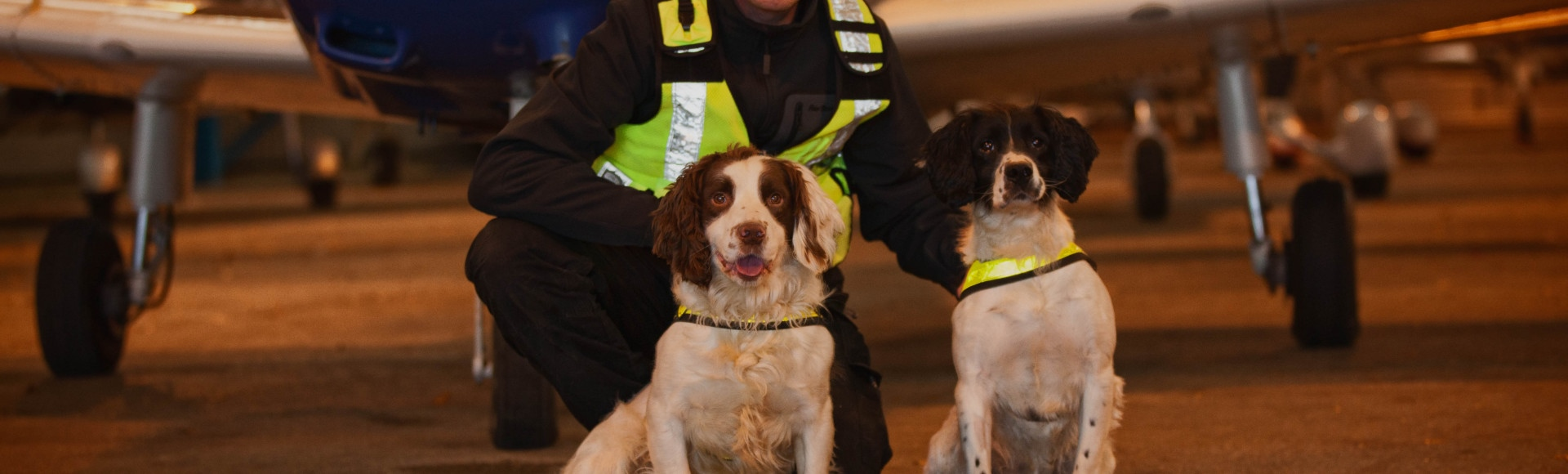 Explosive Detection Dogs Airport